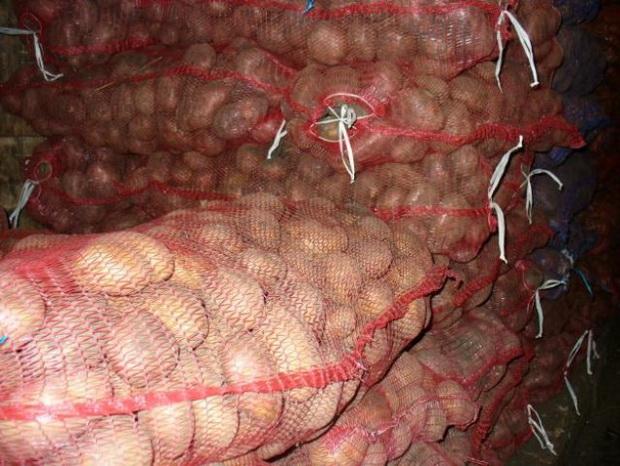 Сорт картофеля: Дельфин