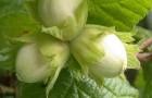 Дерево из орешника и искусственных роз