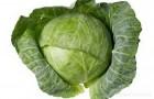 Сорт капусты белокочанной: Диадема