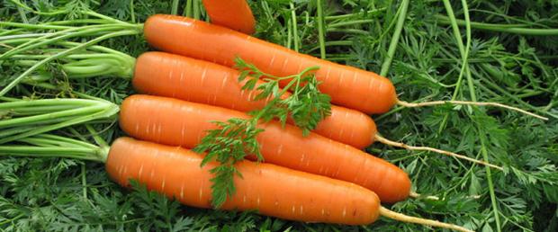 Сорт моркови: Долянка