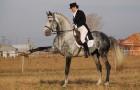 Дрессировка лошадей