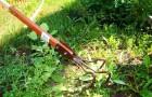 Эффективная борьба с сорняками