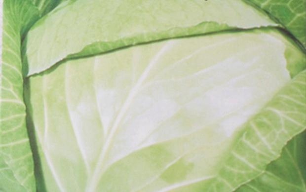 Сорт капусты белокочанной: Экспресс   f1
