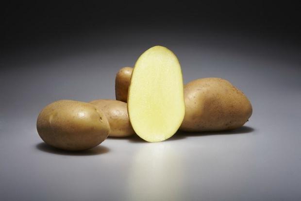 Сорт картофеля: Эстрелла