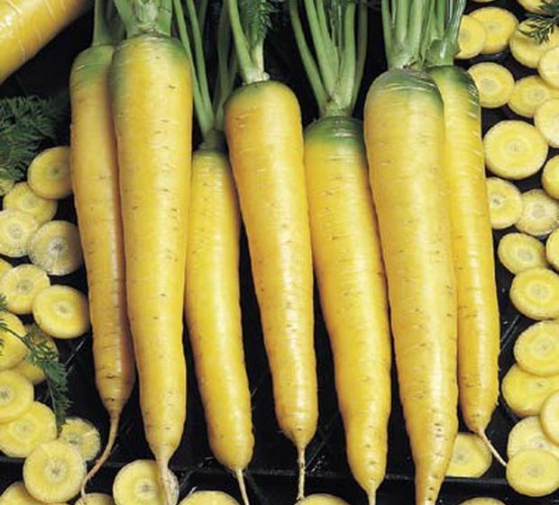 Сорт моркови: Еллоустоун