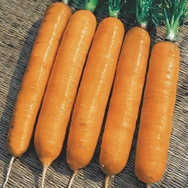 Сорт моркови: Фараон