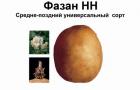 Сорт картофеля: Фазан
