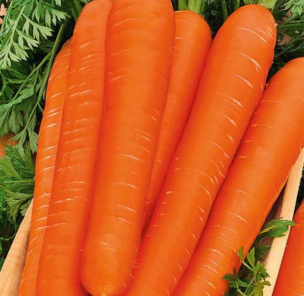 Сорт моркови: Фея