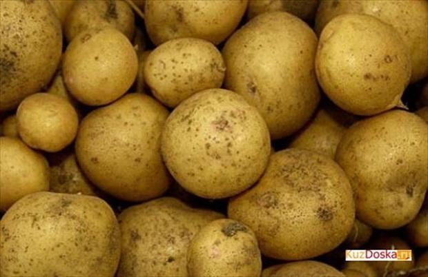 Сорт картофеля: Фиоретта
