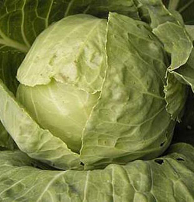 Сорт капусты белокочанной: Герцогиня   f1