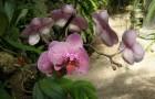 Гнездо с орхидеями