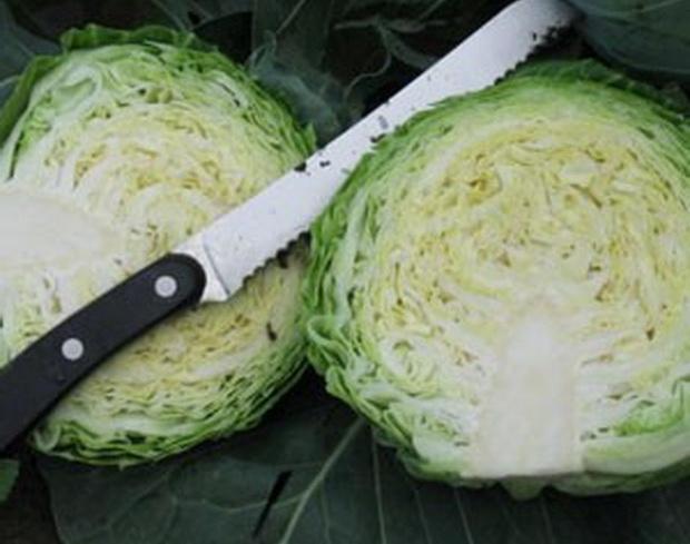 Сорт капусты белокочанной: Гордиус   f1
