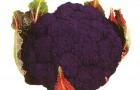 Сорт капусты цветной: Граффити f1