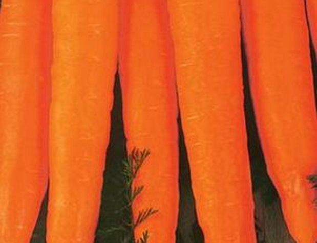 Сорт моркови: Холидей