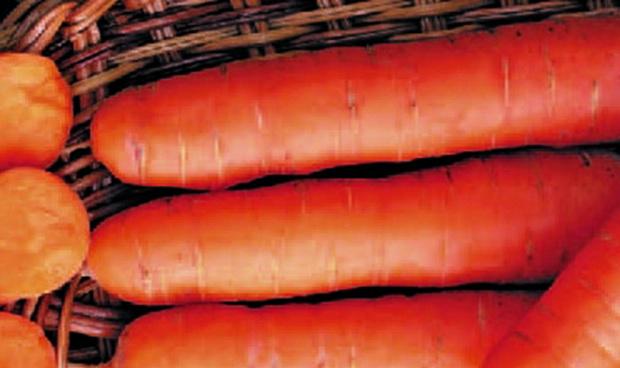 Сорт моркови: Хруста