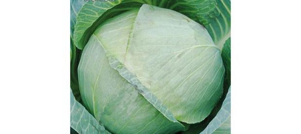 Сорт капусты белокочанной: Идиллия   f1