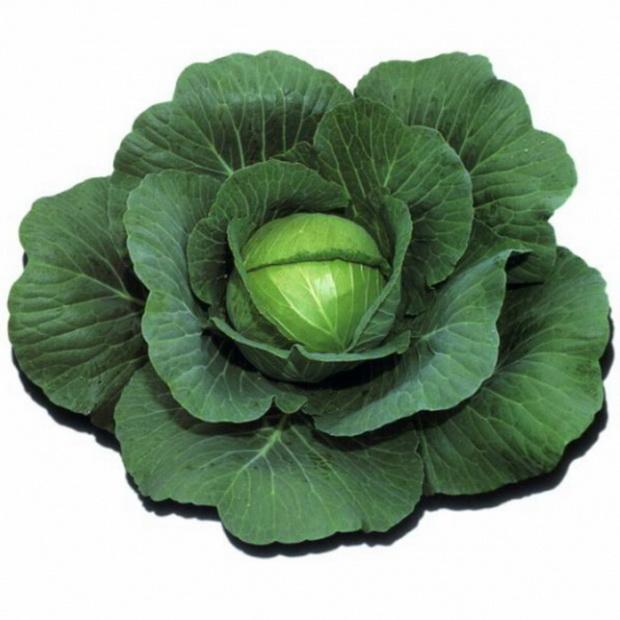 Сорт капусты белокочанной: Ира   f1