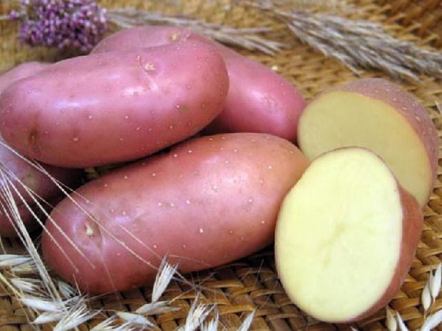 Сорт картофеля: Ирбитский