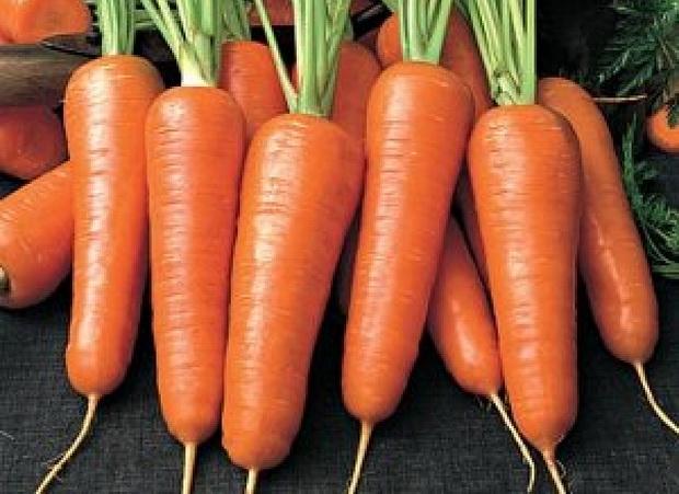 Сорт моркови: Иркут   f1