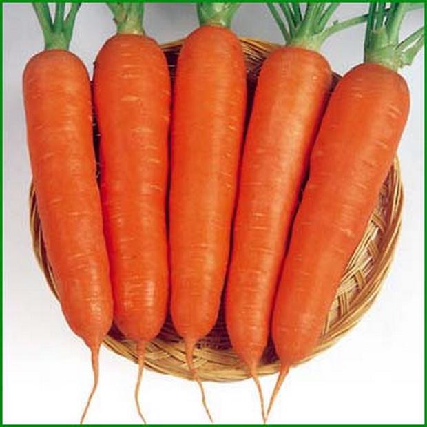 Сорт моркови: Кабана   f1