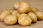 Сорт картофеля: Канберра