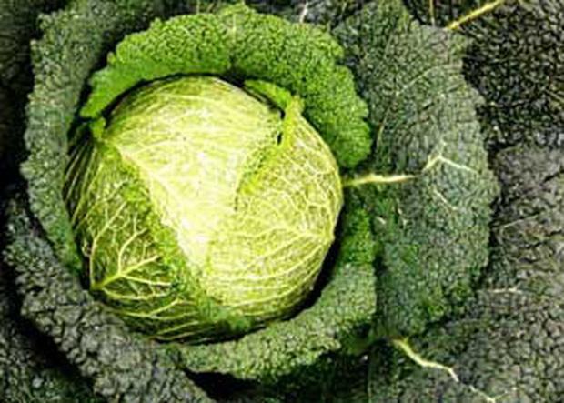 Сорт капусты белокочанной: Кандела   f1