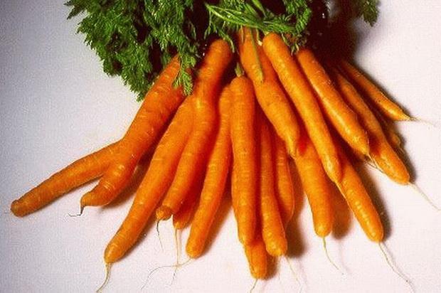 Сорт моркови: Каротан рз