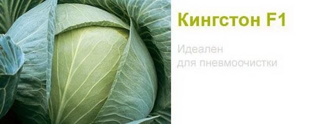 Сорт капусты белокочанной: Кингстон   f1