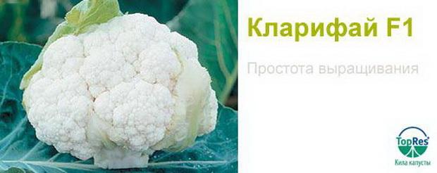 Сорт капусты цветной: Кларифай   f1