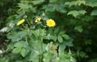 Классификация сорных растений
