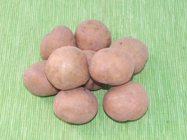 Сорт картофеля: Колобок