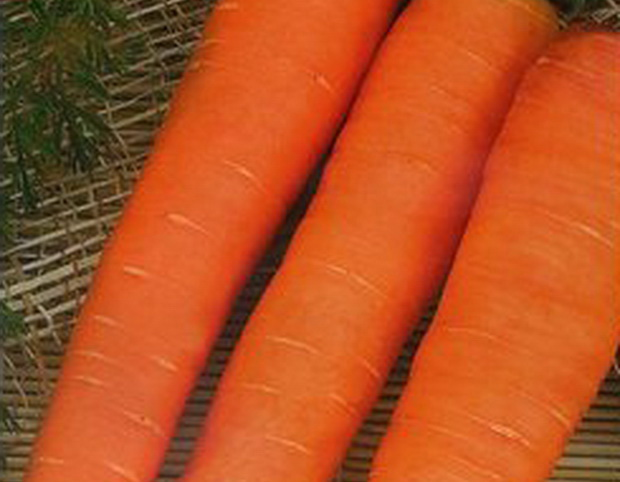Сорт моркови: Концерто   f1