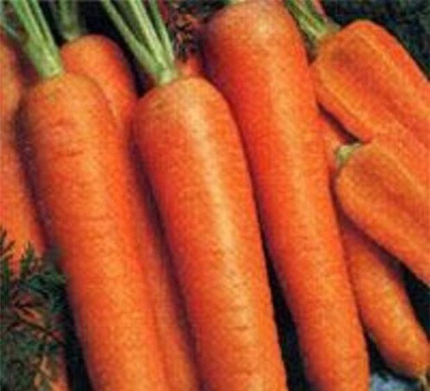 Сорт моркови: Кораль