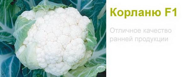 Сорт капусты цветной: Корлану   f1