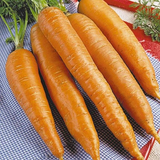 Сорт моркови: Королева осени