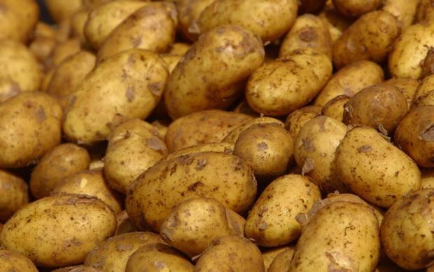 Сорт картофеля: Корона