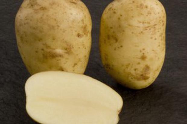 Сорт картофеля: Космос