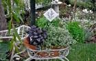 Кованые растения в саду