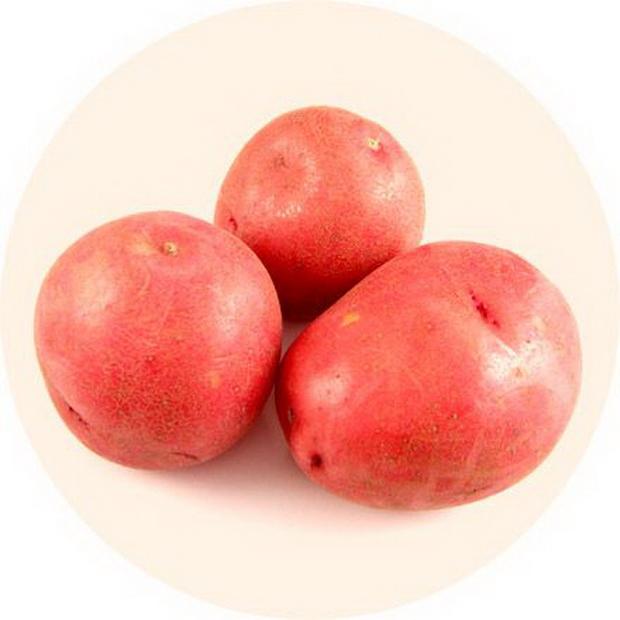 Сорт картофеля: Красная роза