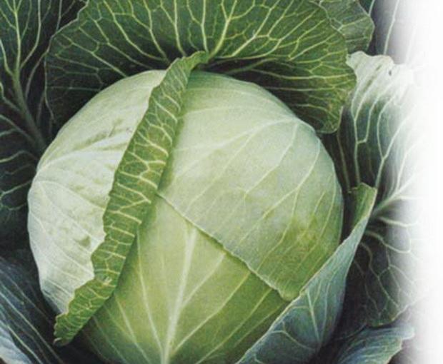 Сорт капусты белокочанной: Крюмон   f1