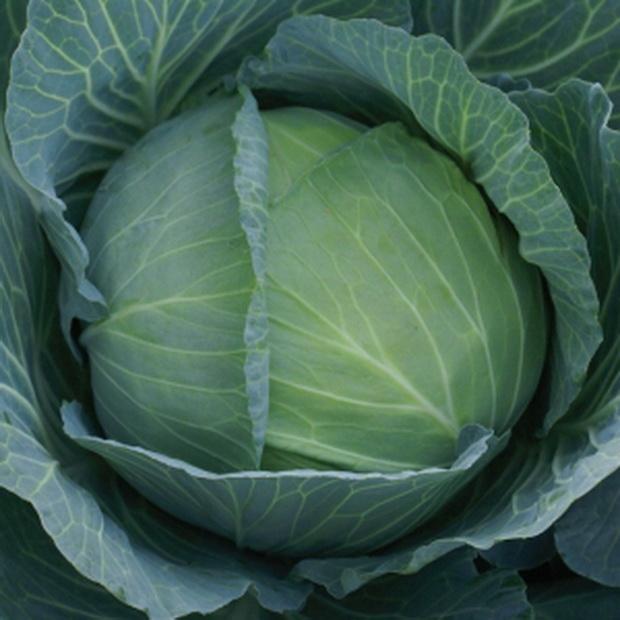 Сорт капусты белокочанной: Кухарка   f1