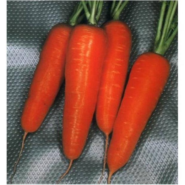 Сорт моркови: Курода шантанэ