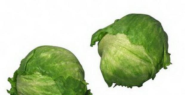 Сорт капусты белокочанной: Квалитор   f1