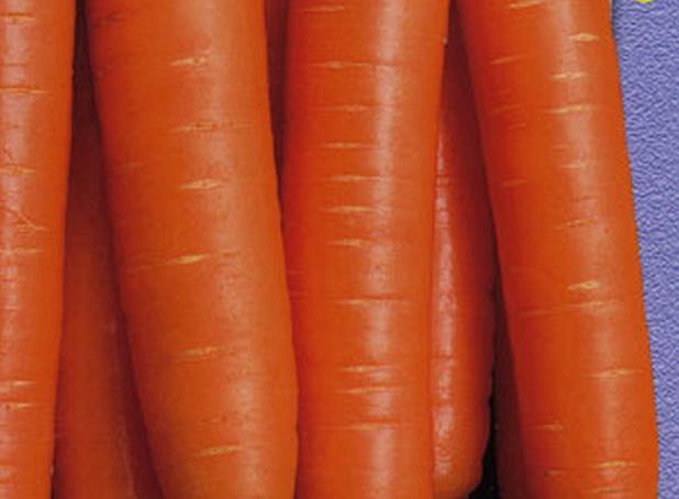 Сорт моркови: Лакомка