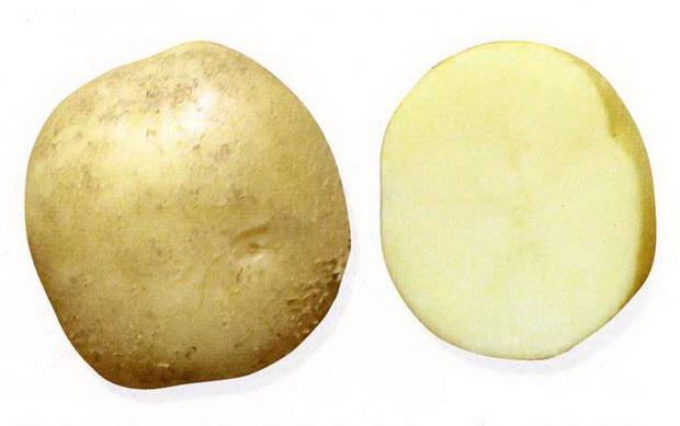Сорт картофеля: Лакомка