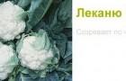 Сорт капусты цветной: Леканю f1
