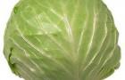 Сорт капусты белокочанной: Лезгинка