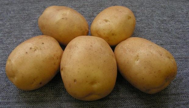 Сорт картофеля: Лидер
