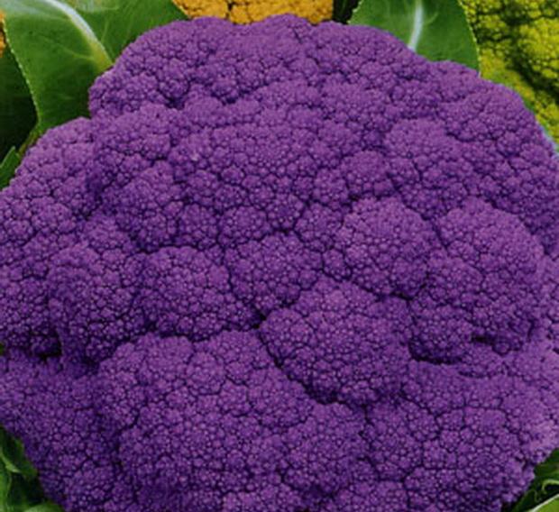 Сорт капусты цветной: Лиловый шар