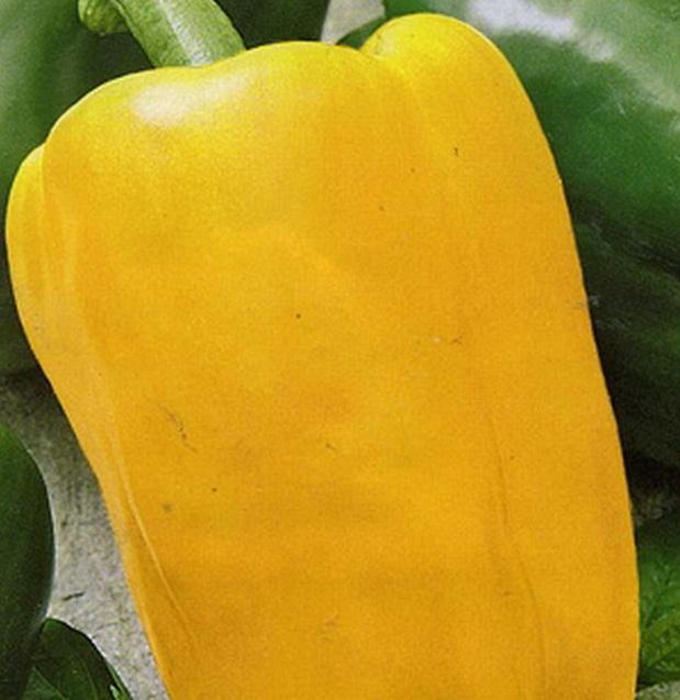 Сорт перца сладкого: Лимонное чудо